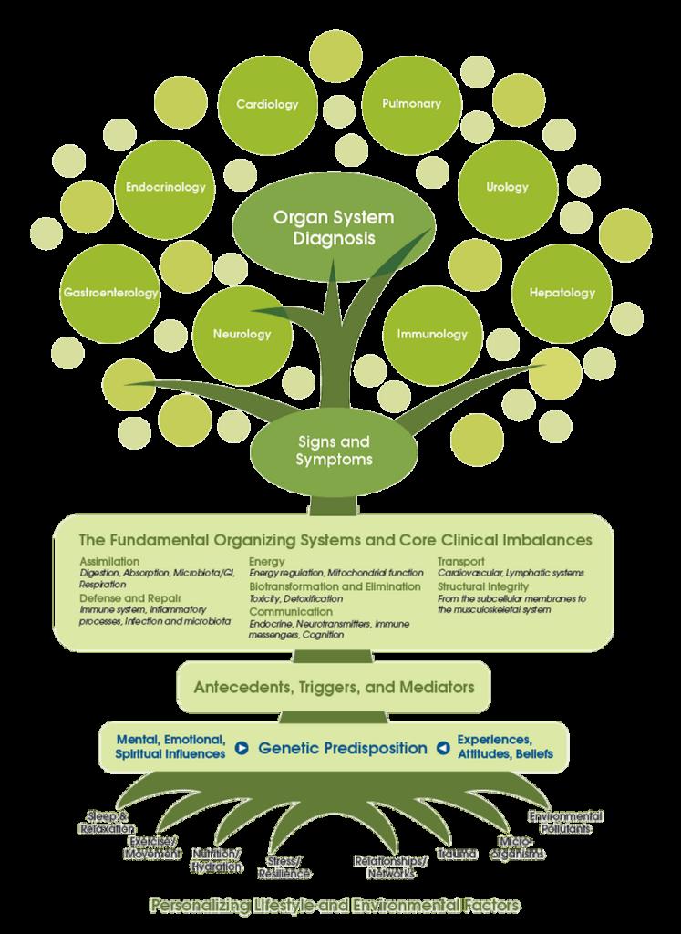 Functional medicine tree diagramm